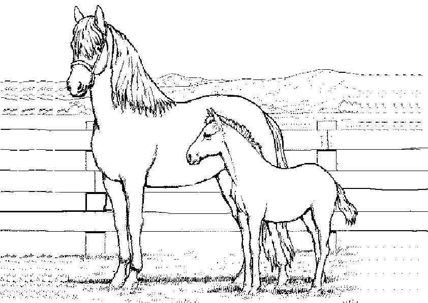 zwei pferden ausmalen
