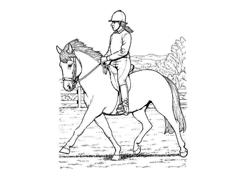 reiter und pferde zum malen
