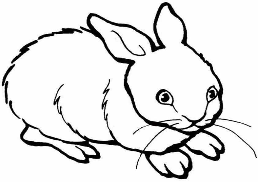 Kaninchen malvorlagen
