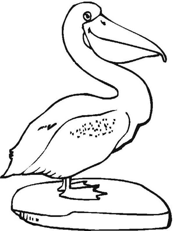 Pelikan malvorlagen
