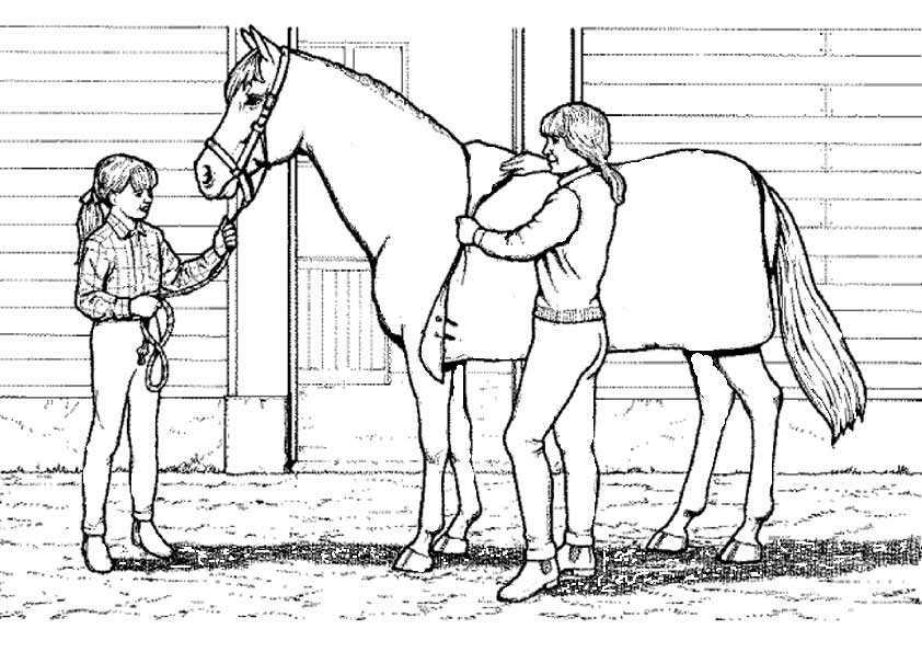 Bilder Pferde 15 malen
