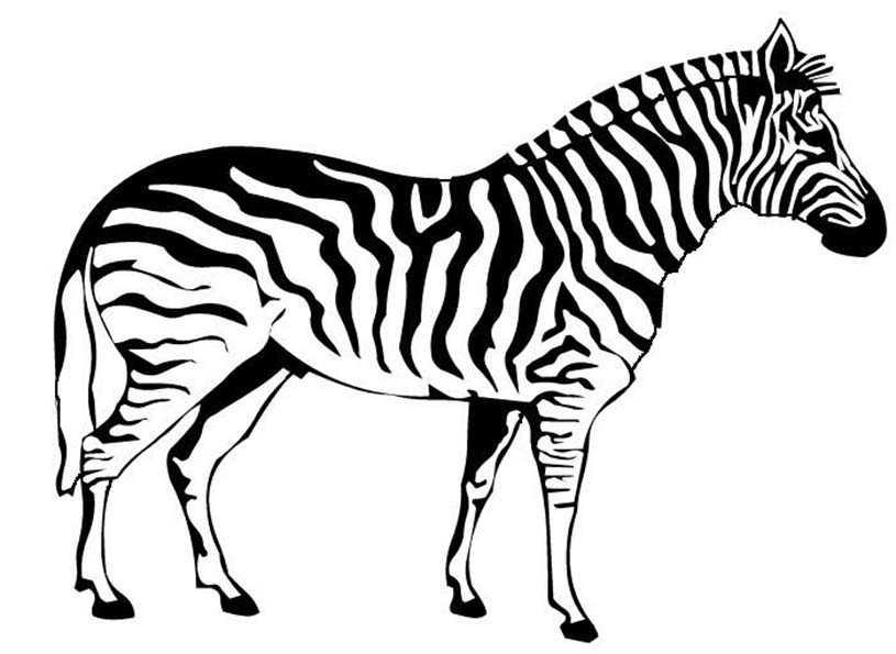 zebra malvorlagen