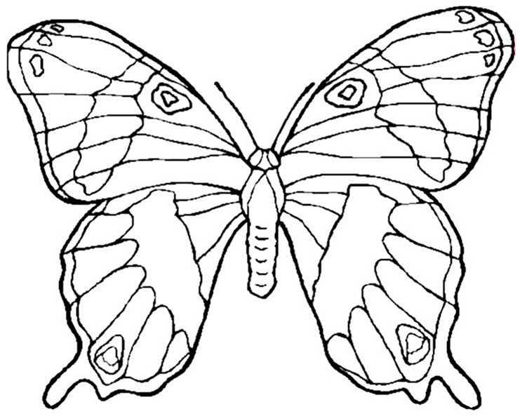 Bilder 3 von Schmetterling