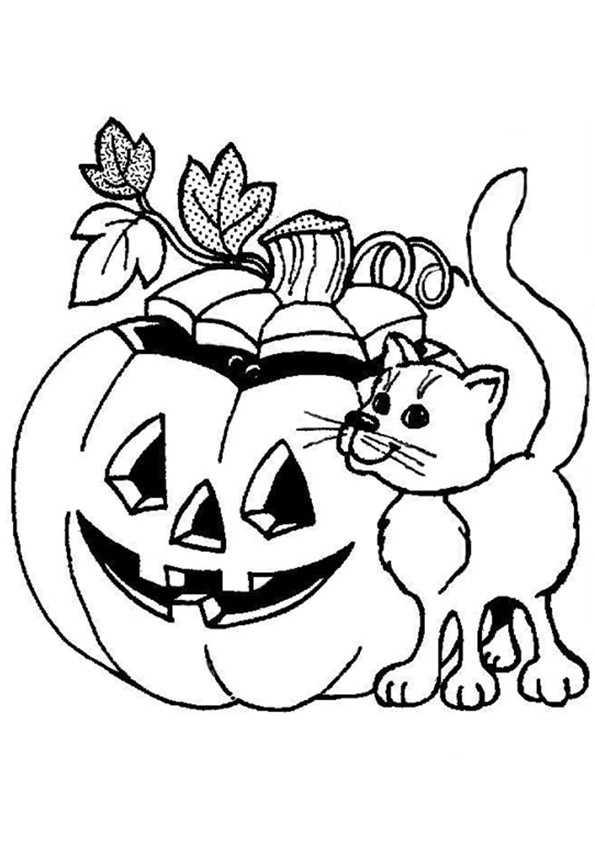 Halloween Kürbis und Katze
