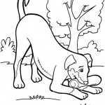 Hunde 3