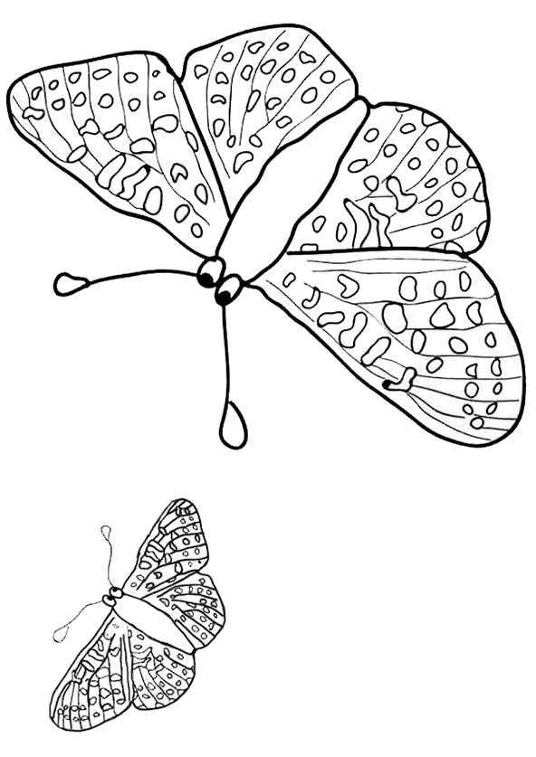 Schmetterling zum ausmalen bilder 6