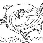 Delfine (3)