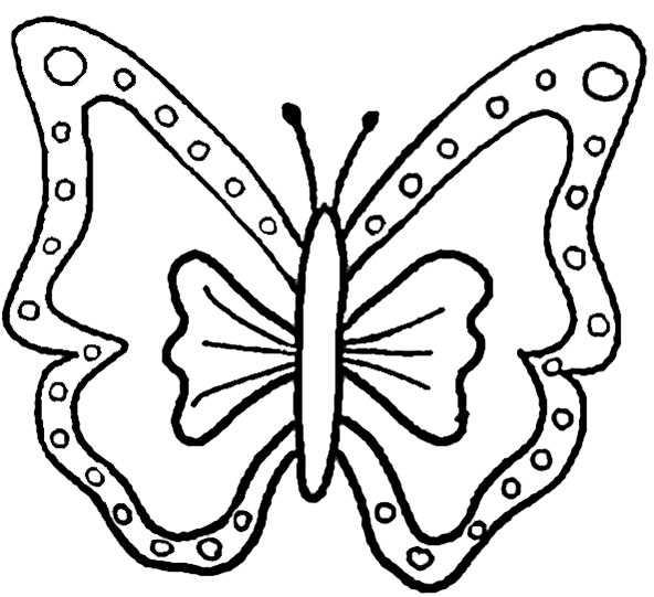 Bilder 7 von Schmetterling
