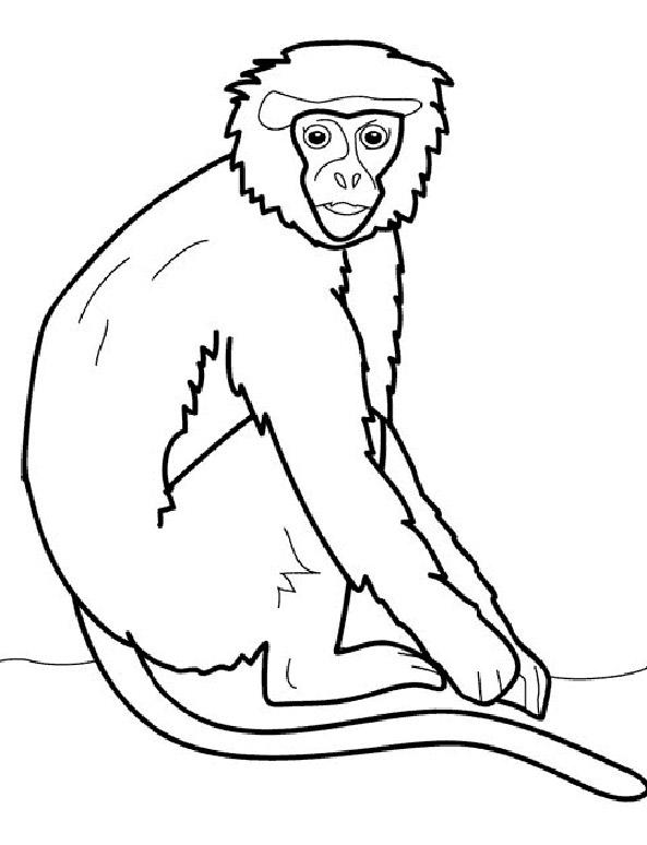 Bild Affe zum ausdrucken (7)