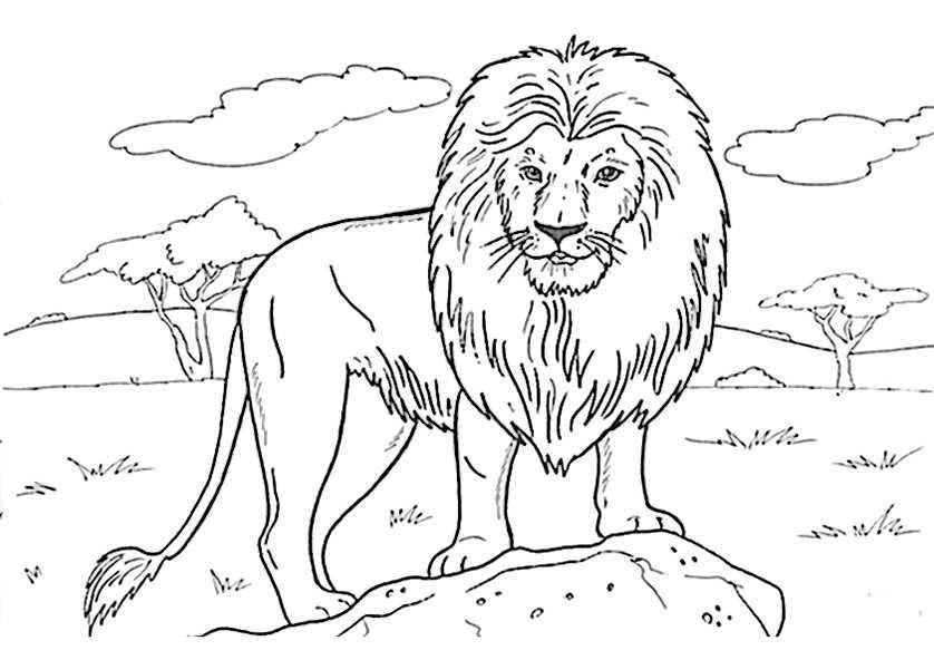 Löwe 23 | Ausmalbilder Kostenlos