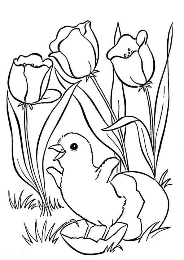 Ausmalbilder Blumen und Vogel 13